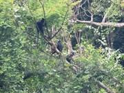 Rescatan exitosamente oso y monos en provincia de Vietnam