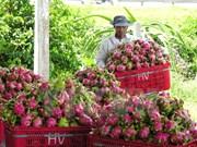 Australia valora importación de pitahaya de Vietnam