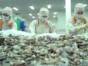 Vietnam prepara exportación de camarones frescos a Australia en 2017