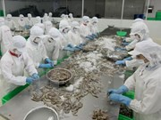 En Vietnam conferencia aborda cultivo de camarones de agua salobre