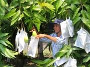 Puerta a mercado australiano abierta para mango vietnamita