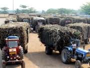 Tailandia revisa su política de producción y distribución de azúcar