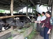 Elogian cooperación en educación agrícola entre Vietnam y Bélgica