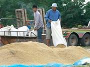 Disminuyen exportaciones arroceras de Camboya