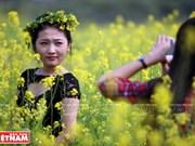 Temporada de florecimiento de la mostaza