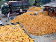 Vietnam suspende importación de granos de EE.UU. y cacahuetes de Sudán y Hongkong