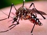 Vietnam continúa aplicando medidas para prevenir Zika