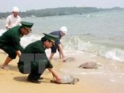 Interceptan carga ilícita de tortugas en provincia survietnamita