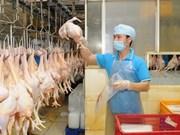 Vietnam impulsará la exportación de carne de pollo procesado