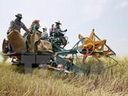 Tailandia financiará la producción de arroz de agricultores nacionales