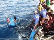 Provincia de Vietnam aumenta apoyo financiero a pescadores
