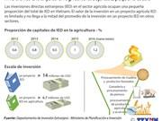 [Infografía] Inversiones extranjeras en la agricultura de Vietnam