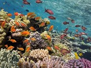 Vietnam posee más de mil kilómetros cuadrados de arrecife de coral