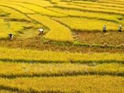 Vietnam y Japón impulsan cooperación en agricultura