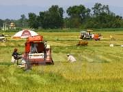 Vietnam se esfuerza por modernización rural y reestructuración agrícola