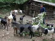 Logra Vietnam avances en reducción de la pobreza en áreas de etnias minoritarias