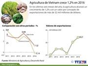 [Infografia] Agricultura de Vietnam crece 1,2% en 2016