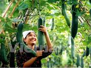 Exportaciones hortofrutícolas de Vietnam siguen con bueno rumbo