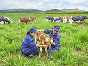 Vietnam inaugura primera planta lechera orgánica