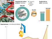 [Infografía] Exportaciones de camarones de Vietnam representan el 45% de producción mundial