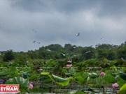 [Fotos] Rámsar de Lang Sen atrae interés de turistas