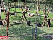 [Fotos] Nueva casa para los osos en Vietnam