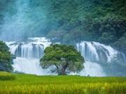 Cascada de Ban Gioc - obra maestra natural en el Sudeste Asiático