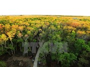 El manglar de Ru Cha en la laguna de Tam Giang