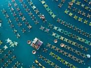 [Fotos] Fotos de la semana: la cría de camarones desde la vista aérea