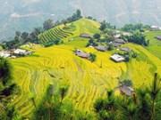 [Video] Ofrece Vietnam servicios turísticos cada vez más profesionales a visitantes