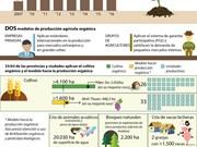 [Infografía] Agricultura orgánica-tendencia inevitable en Vietnam