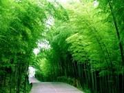 Peculiar colección de bambú en provincia vietnamita de DongThap