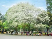 Hanoi, destino ideal para turismo en marzo