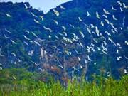 """""""Isla de Cigüeñas"""" en la provincia norteña de Ninh Binh"""