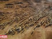 [Fotos] El pequeño disierto de Ninh Thuan