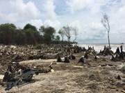 [Fotos] Erosión costera amenaza seguridad de obras marítimas en Vietnam