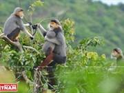 """[Fotos] """"Reina de los primates"""" en la península de Son Tra"""