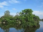 Provincia de Thua Thien- Hue invierte en reforestación de manglares