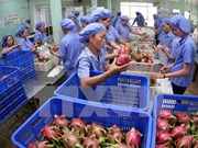 Aumenta exportación de frutas frescas de Vietnam a mercados exigentes