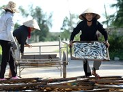 Vietnam enfrascado en solución de consecuencias de incidente ambiental