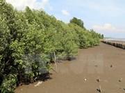 Proyecto financiado por Japón aumenta superficie de manglares en Vietnam