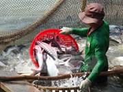 En alza exportación vietnamita de pescado Tra