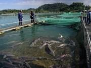 Éxitos y desafíos de Vietnam en aprovechar recursos marinos