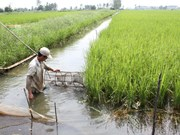 Cuba promueve cooperación con Delta del Mekong de Vietnam
