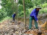 Grupo vietnamita impulsa proyectos caucheros en Camboya