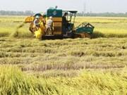 Vietnam gana 2,2 mil millones de dólares por exportaciones arroceras en 2016