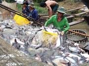 Vietnam aspira a siete mil 100 millones de USD por exportaciones acuícolas en 2017