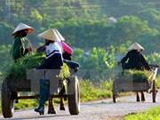 Evalúan labores de desarrollo agrícola y rural en Vietnam en 2016