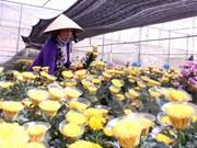 Da Lat establecerá centro comercial de flores