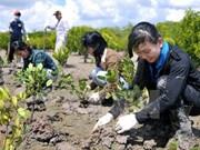 Inician proyecto de gestión de forestación sostenible en Vietnam